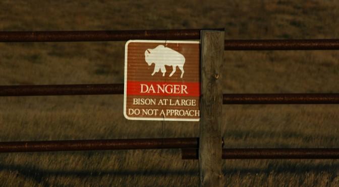 Prairie Pilgrimage: I