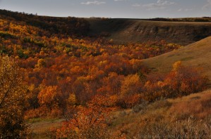 Coulee just south of Willow Bunch. September 27, 2015.