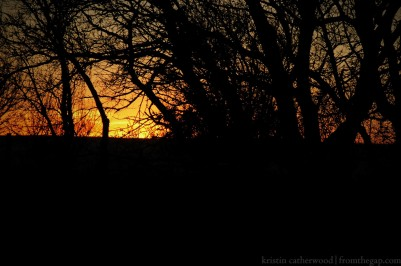 Branches Sunset
